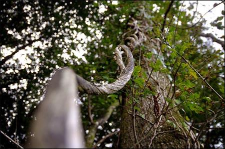http://triturages.free.fr/blog/2012/03/lianeb.jpg